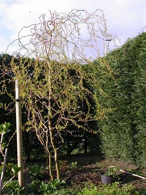 krulwilg-2007