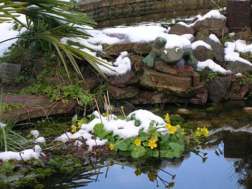 dotterbloem-in-de-sneeuw